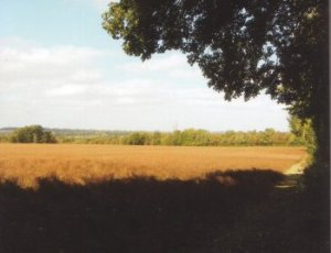 Farmland from Salters Lane